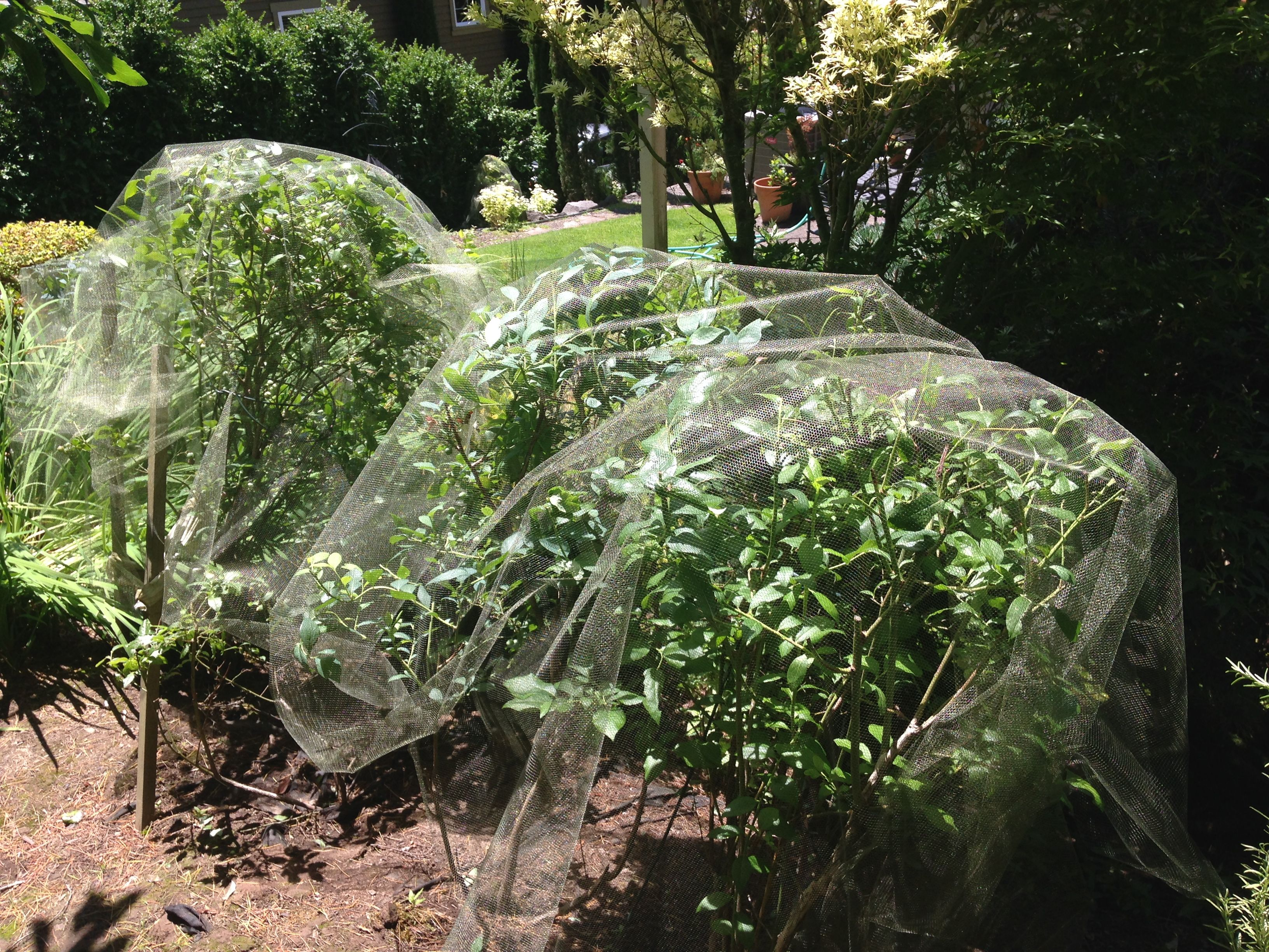 Protect berry bushes from birds without the hassle of