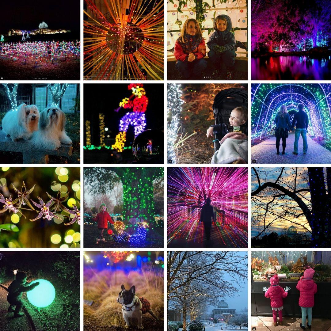542f48e2bd24bf3947a9f80860e99664 - Savannah Botanical Gardens Christmas Lights 2018