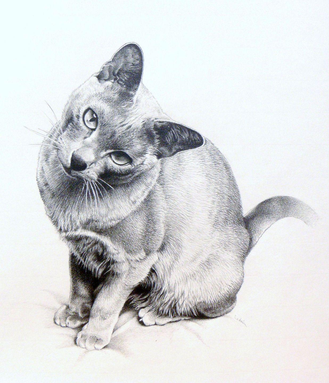Dessin le chat crayon de papier dessins par la fee cameleon dessin pinterest lungs - Desin de chat ...