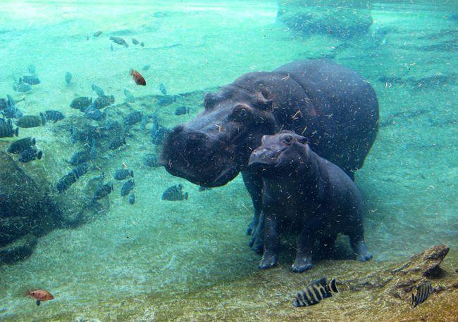 How do u say homepage in spanish hippopotamus