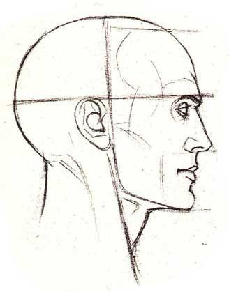 пропорции головы в профиль