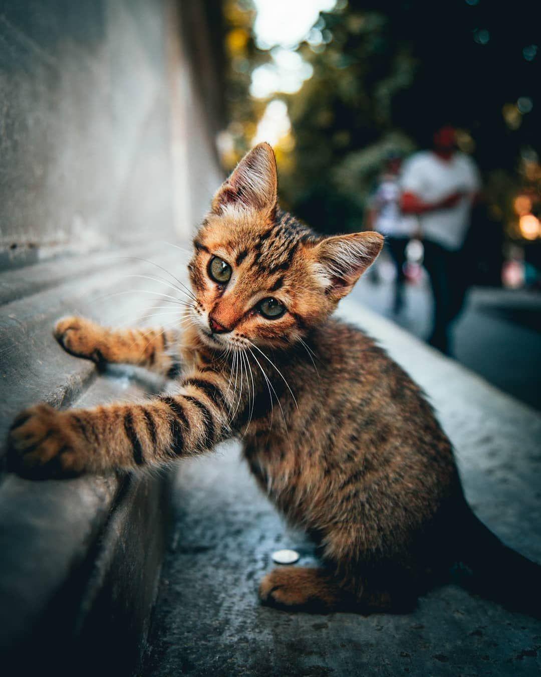 "Pleasant Cats 🇹🇷 on Instagram ""📷 from omeryesilirmak"
