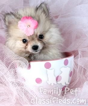 Evil Sick Puppy Seller See Teacup Dogs And Health Evil Stores