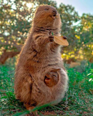 19 Fotos Von Tieren Die Deinen Tag Garantiert Besser Machen Susse Tiere Tiere Niedliche Tiere