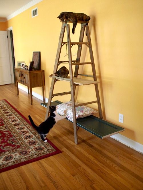 Cat tree using a vintage ladder!Still in progress.We are ...