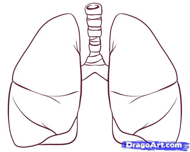 How to draw lungs step 4 draws pinterest drawing course how to draw lungs step 4 ccuart Images