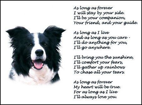 Opinion you border collies mature victoria australia