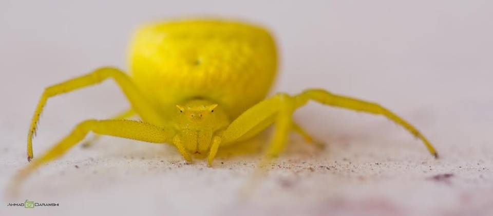 تصوير أحمد دراوشة Animals Crab