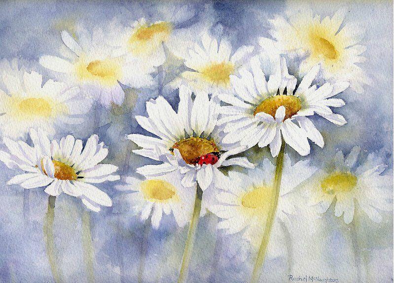 искренние цветы ромашки картинки акварель петрович