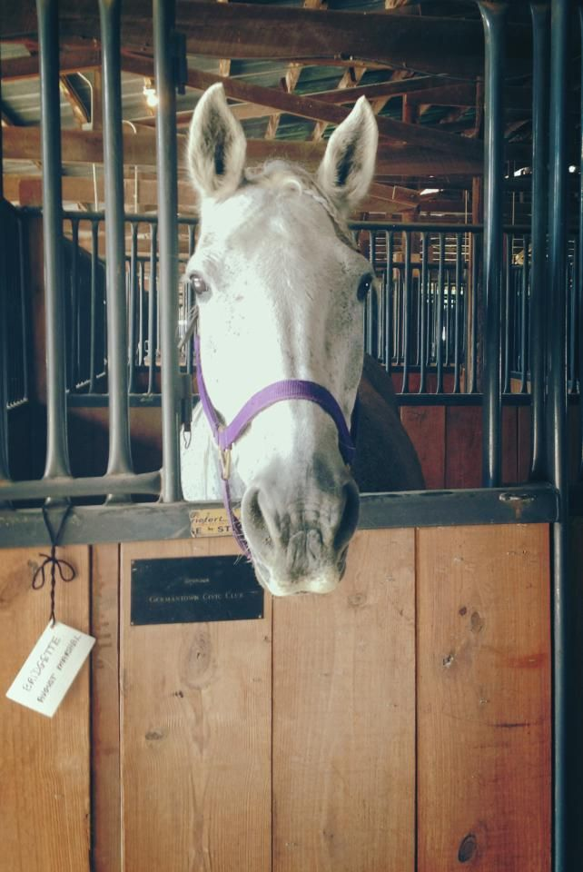 Meet Bridgette She Is A Horse And Another Example Of Artificial