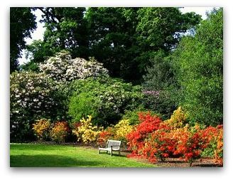 Choose Garden Shrubs That Are Suitable For Your Garden. Evergreen,  Deciduous And Flowering Bushes