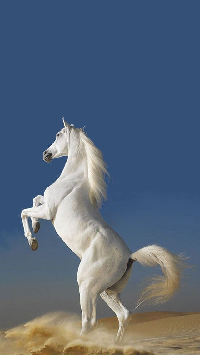 White Horse Animals And Nature Iphone Wallpapers Tap To See More Apple Iphone Hd Wallpapers Mobile9 Horse Wallpaper Horses Beautiful Horse Pictures