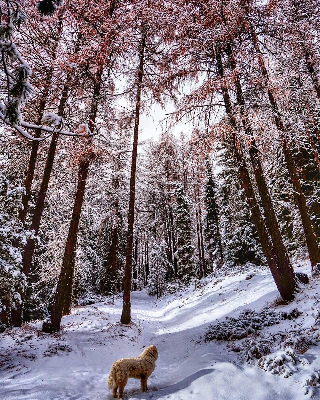 #winter #wintercolors #altoadige #südtirol #valgardena #outdoors by valenteana__