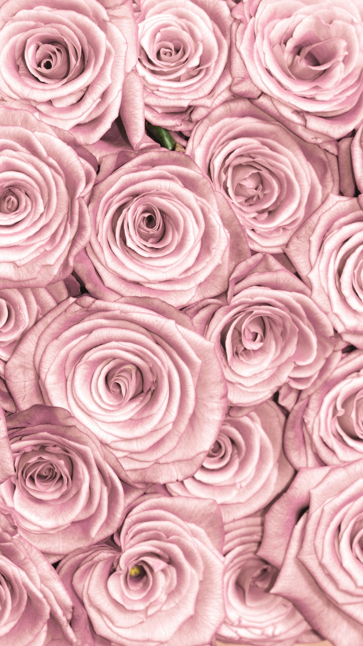 Iphone Background Pink Roses Rose Gold Wallpaper Iphone Rose Gold Wallpaper Gold Wallpaper Background