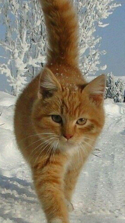 Google Ar Animals Cat