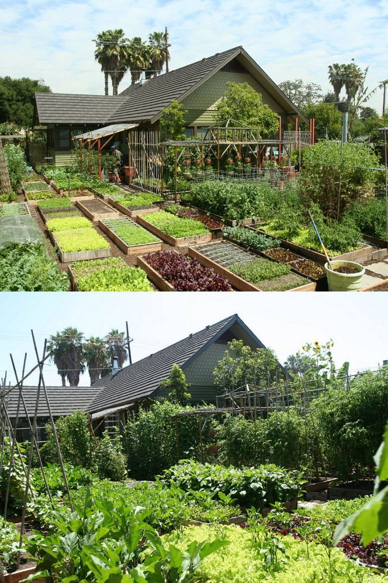 8 Easy Steps to Start Your Best Vegetable Garden! is part of Vegetable garden, Garden planning, Diy garden trellis, Organic vegetable garden, Backyard, Starting a vegetable garden - 8 Easy steps to plan & start an abundant vegetable garden! Best beginners organic gardening tips design, layout, soil, compost, weed & pest control, etc