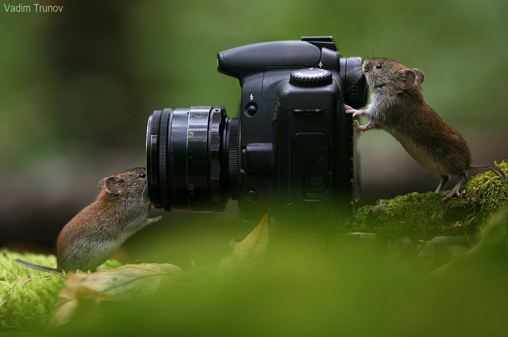Mouse photoset by Vadim Trunov on 500px