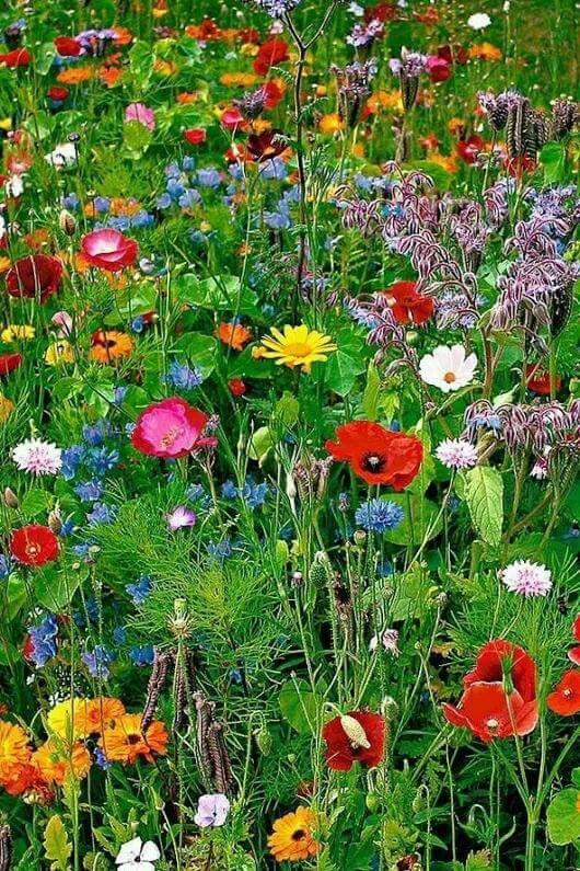 Pin by Vljohnson on FLOWERS in 2020 Wildflower garden