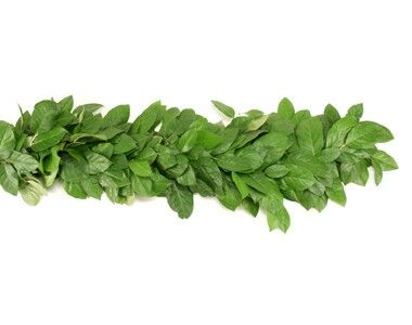 This is the beautiful Salal leaf garland!