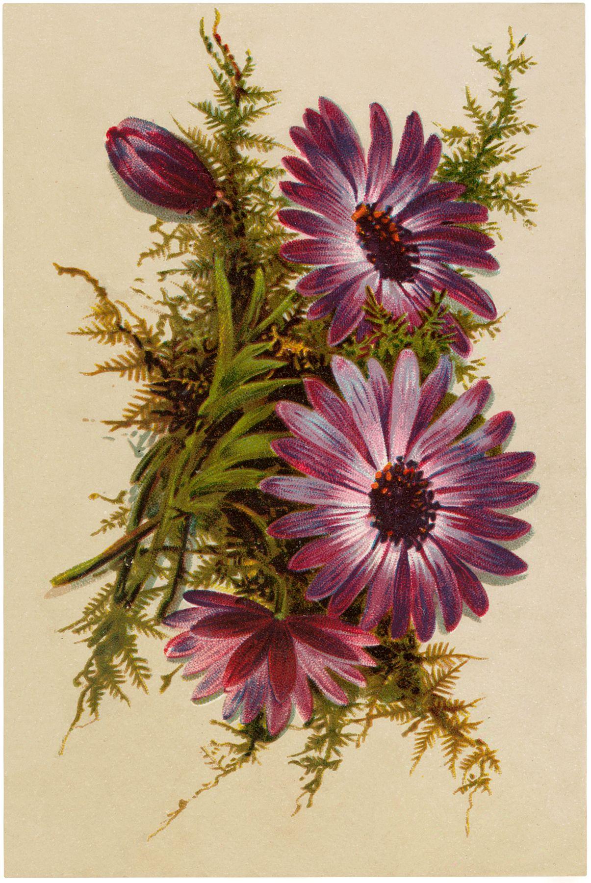 Pretty Purple Flowers Image Flower printable, Vintage