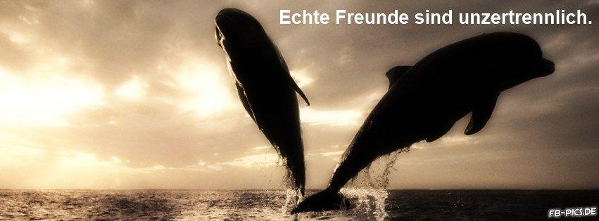 Freundschaft Vertrauen Delphine Weisheit Facebook Titelbilder