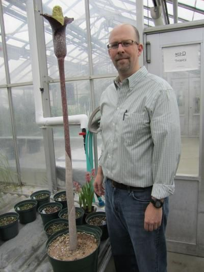 Botanist Greg Wahlert and Amorphophallus perrieri [image] | EurekAlert! Science News
