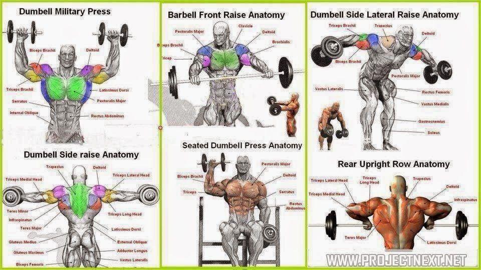 Top 6 Shoulder workouts! ~ Fitness inspiration   Shoulder ...