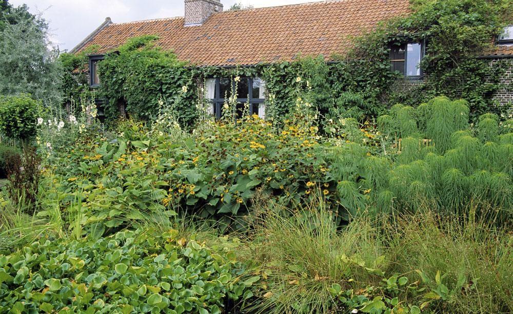 Verwilderter Garten In Der Nachbarschaft Naturgarten Garten Traumgarten