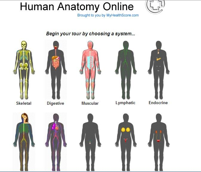 Human Bodyg 673575 Science Body Systems Pinterest Body