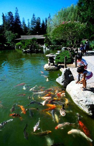 I remember feeding the koi fish at the japanese friendship for San jose fishing spots