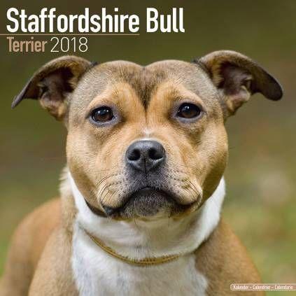 Avonside Hunde Kalender 2018 Avonside Hunde Wandkalender 2018 Staffordshire Bull Terrier With Images Staffordshire Bull Terrier Bull Terrier Terrier