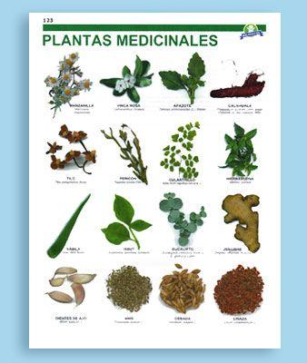 Plantas Medicinales Dibujos Antiguos Buscar Con Google Planting Herbs Plants Herbs