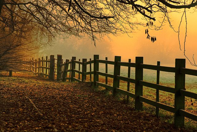 Misty Dawn at Caldicot Castle Country Park by -terry-, via Flickr
