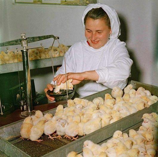 Советский Союз 50-х | Советский союз, Фото семьи, Фотографии
