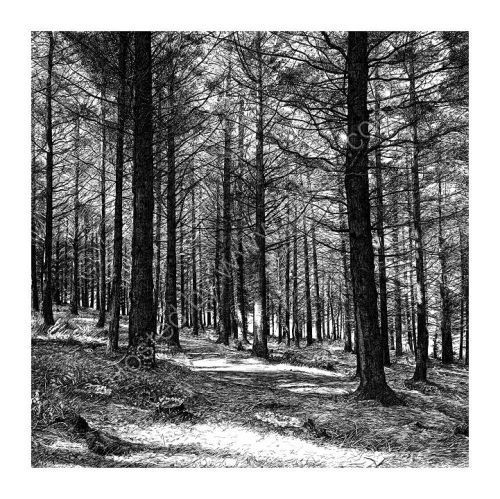 Picture Framing Kegworth | Forest drawing, Pencil drawings ...