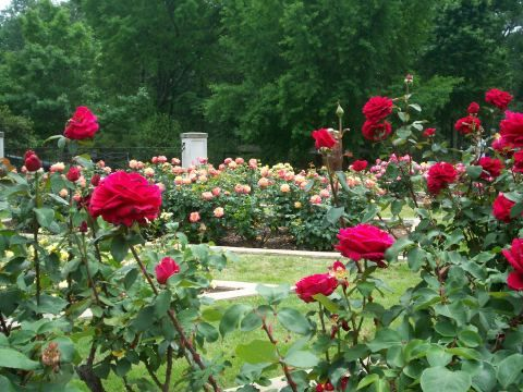 Dunn Formal Rose Garden Birmingham Botanical Gardens Birmingham Alabama Birmingham Botanical Gardens Garden Fertilizer Garden Soil