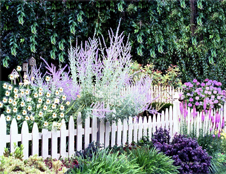 Lavendar Summer Garden Purple Flowers White Picket Fence