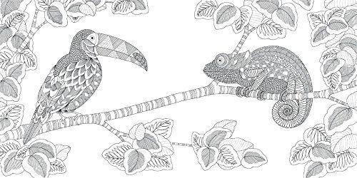 Colouring In Book Millie Marottas Animal Kingdom
