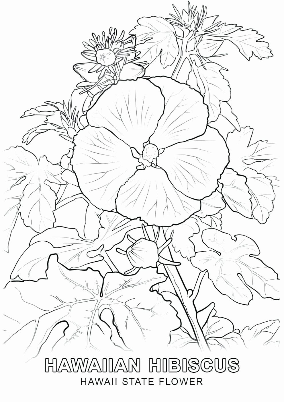 Hawaiian Shirt Coloring Page Unique Hawaiian Coloring Page