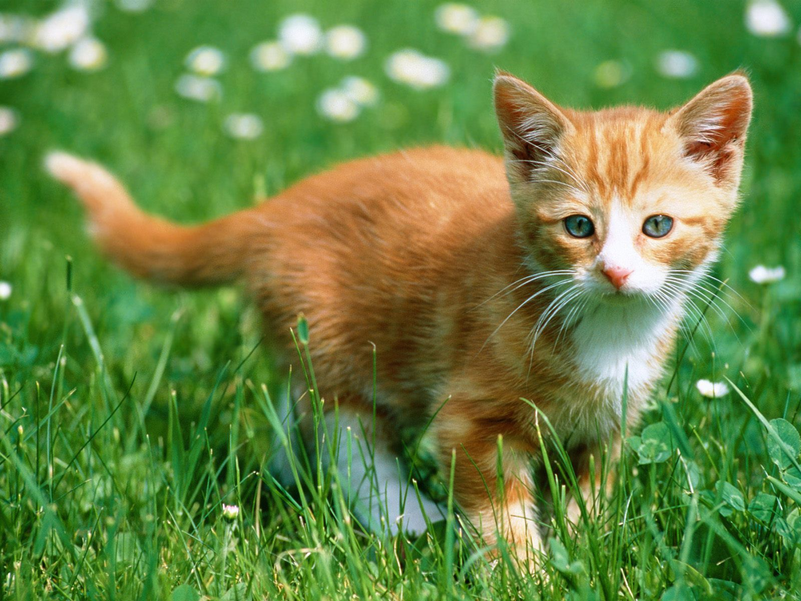 Kittens Of Cat Wallpapers Of Cats Wallpapers Of Cats And
