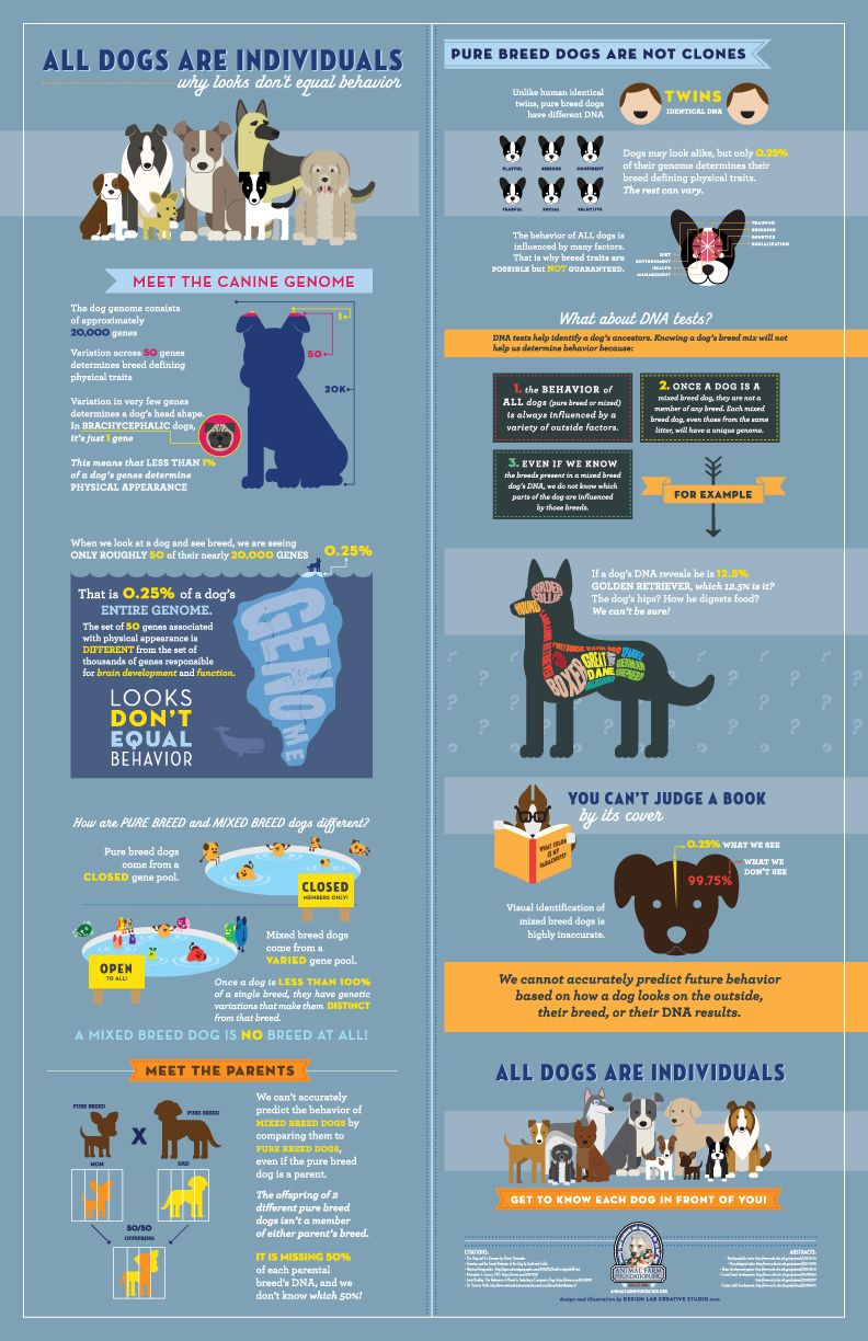 This Is Important And Precisely Why Breed Specific Restrictions Are Ludicrous Pure Breed Dogs Dog Infographic Dogs