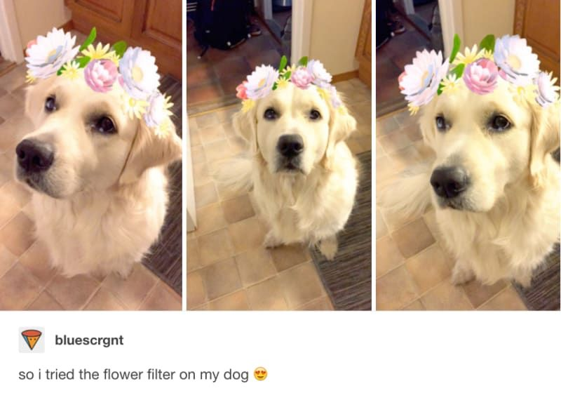 And This Unusual Bath Bomb Dog Tumblr Dogs Funny Dog Faces