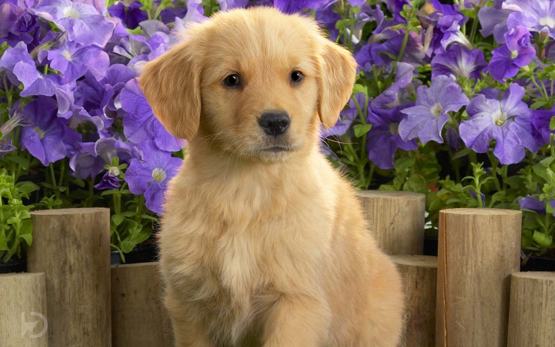 Puppy Cute Wallpaper Hd 30 For Desktop Background Jpg 1920 1200