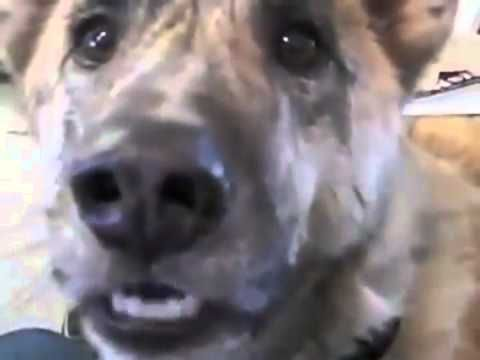 Doritos Talking Dog Commercial Featuring Clark G The Talking Dog