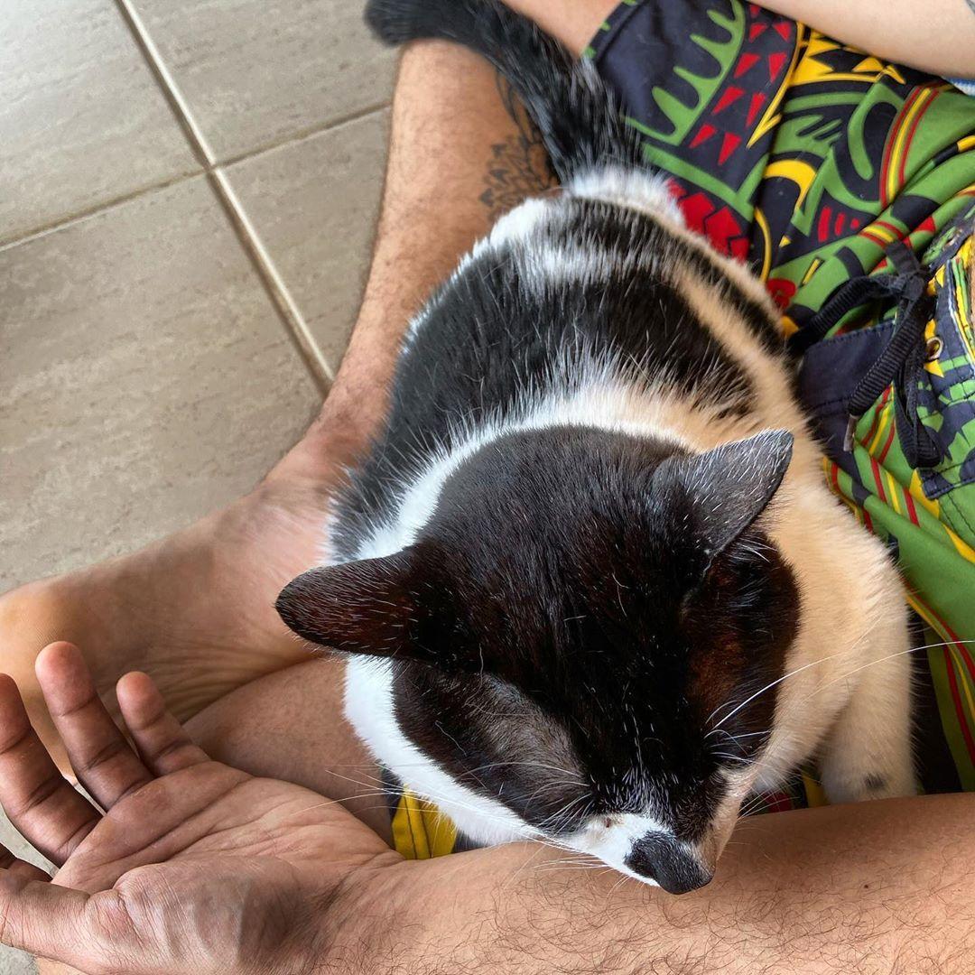 E Voces Humanos Ja Meditaram Hoje Eu Ja Domingou Catsofinstagram Cats Of Instagram Meditatorcat Eufarofa Cats Of Instagram Cats Animals