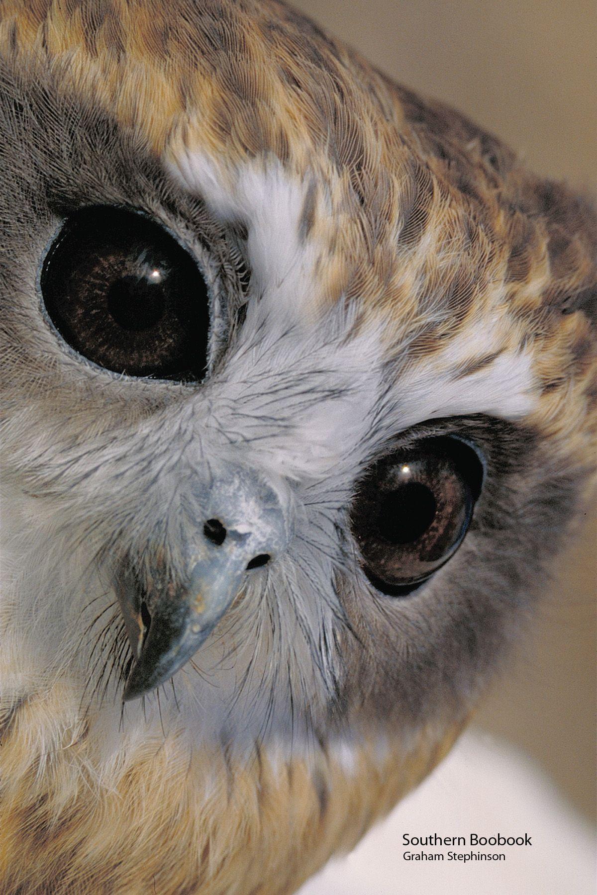Look At Those Beautiful Eyes I Love Owls Owl Owl Eyes