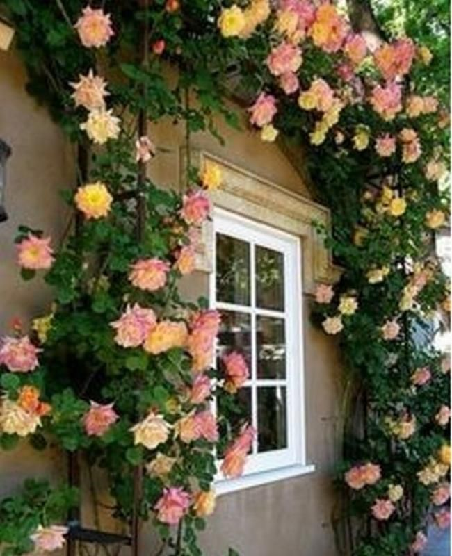10 Easy Tips To Plant A Climbing Rose All Decorations