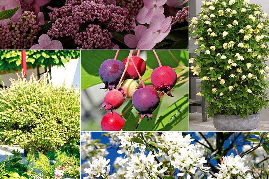 Schone Pflanzen Fur Einen Naturlichen Sichtschutz Im Garten Straucher Garten Garten Sichtschutz Garten