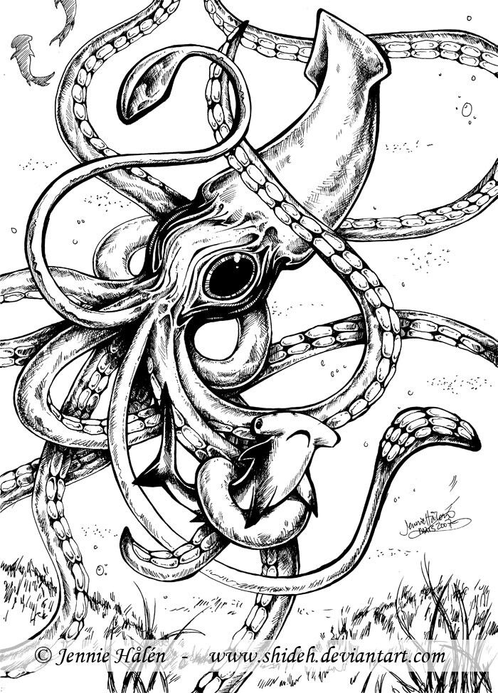 Drawing Giant Squid Squid Drawing Squid Tattoo