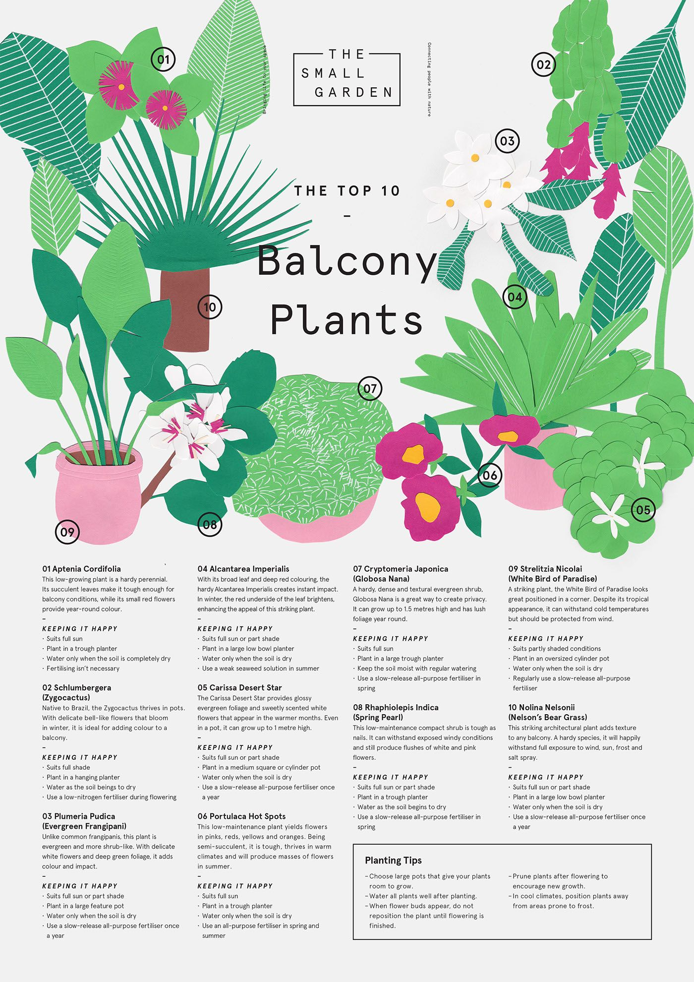 Balcony Plants Illustration On Behance